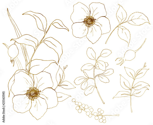 Photo Vector golden sketch anemone set
