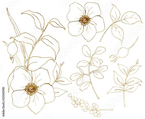 Foto Vector golden sketch anemone set