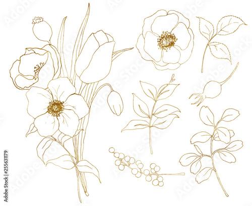 Vector golden sketch anemone and tulip big set Canvas Print