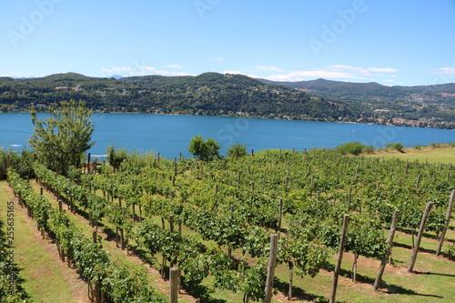 Fotografia  Wine growing at Lake Maggiore in Italy