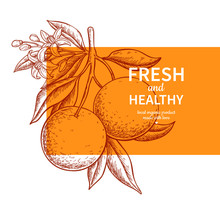 Orange Label Vector Drawing. Citrus Fruit Engraved Template.