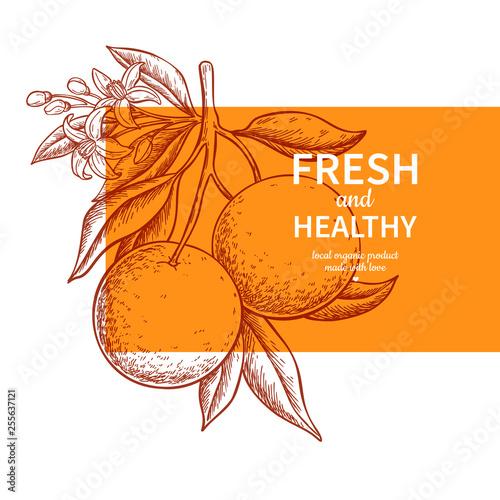 Orange label vector drawing. Citrus fruit engraved template. Fototapete