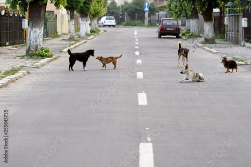 Europe de l Est dogs on street in romania