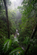 Mossman Gorge In Queensland, A...