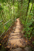 Steps In The Forest At The Mossman Gorge In Queensland, Australia