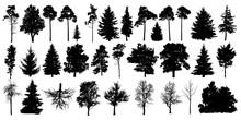 Tree Silhouette Black Vector. ...