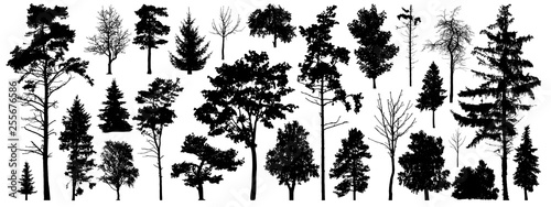 Foto  Tree silhouette vector. Isolated forest trees on white background