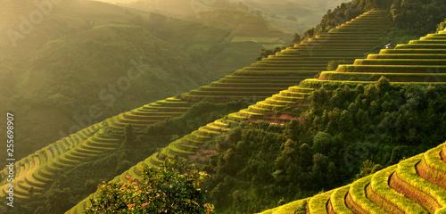 Panorama Mu Cang Chai, landscape terraced rice field near Sapa, north Vietnam