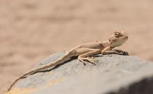 Closeup Of Egyptian Desert Aga...