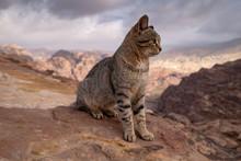 Cat In Wild Stone Landscape Of Petra In Jordan