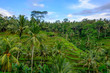 Tegallalang Rice Terraces in Bali - Ubud Attractions