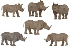 Set Of Rhinoceros Animals, Iso...