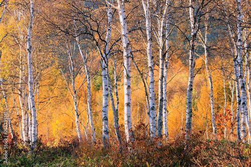 Jesienny płaskowyż