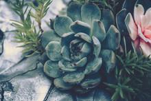 Succulent Plants. Vintage Style