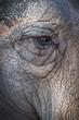 The eye of the elphant