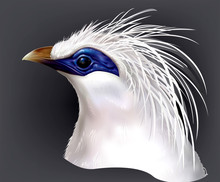 Head Bali Myna Leucopsar Rothschildi Rare Endemic Bird