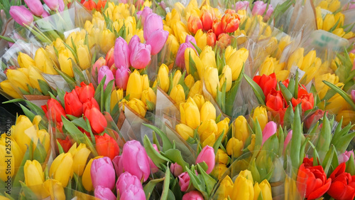 Fototapety, obrazy: many pink, red, yellow packaged tulips bunches, flowers store, florist shop. Flower market or store. Wholesale and retail flower shop. Florist service. mother's day