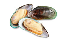 Two Raw New Zealand Mussels