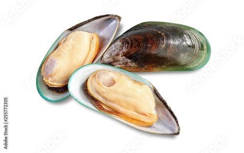 Fotografiet Two raw New Zealand mussels