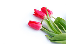 Three Tulips On The White Background