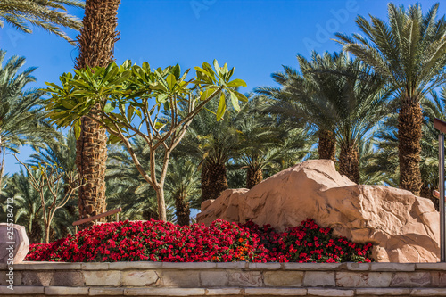 Tropic Garden Exterior Design Concept Place With Colorful Green