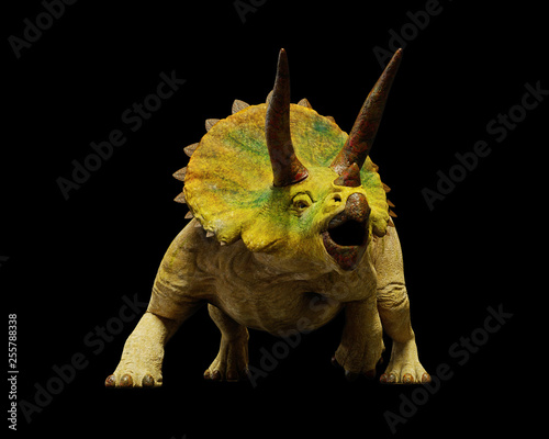 Fototapeta  Triceratops horridus dinosaur, extinct prehistoric animal (3d render isolated on