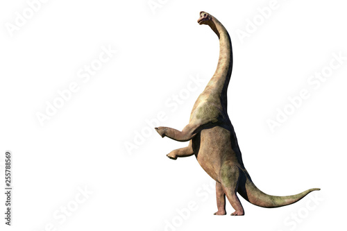 Fotografie, Obraz  Brachiosaurus altithorax from the Late Jurassic in action (3d illustration isola