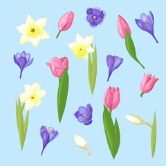 Spring set of daffodils, tulips and crocuses