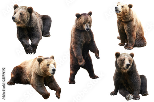 Set of bear over white background