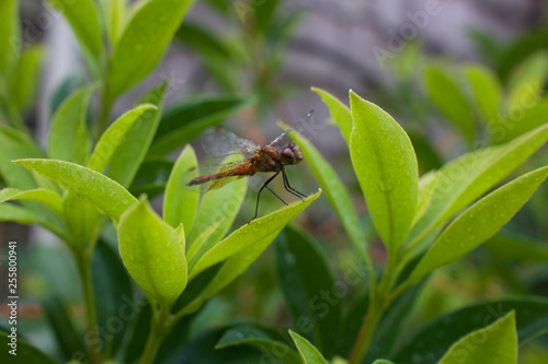 Fotografie, Obraz  Dragonfly perched on leaf