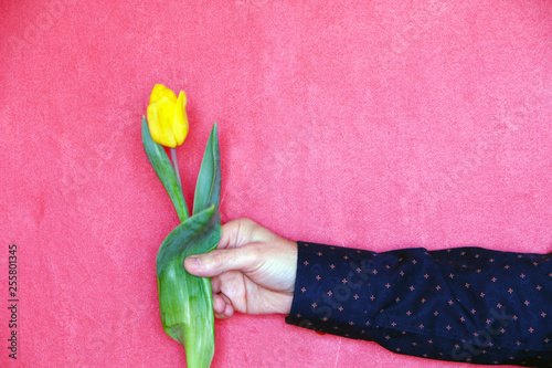 Garden Poster Tulip Close-up - yellow tulip on a red background