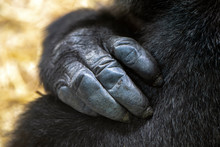 Cropped View Of Black Hand Of ...