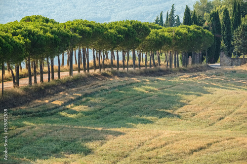 Keuken foto achterwand Khaki Scenic rural landscape of the green hill near maritime pine trees a long the road in the natural park of Tuscany, Italy. Fantastic outdoor photography.