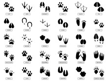 Animals Footprints. Animal Feet Silhouette, Frog Footprint And Pets Foots Silhouettes Prints Vector Illustration Set