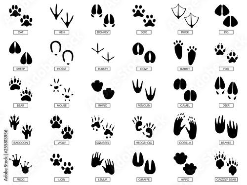 Cuadros en Lienzo Animals footprints