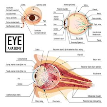 Eyeball Infographic. Cartoon O...