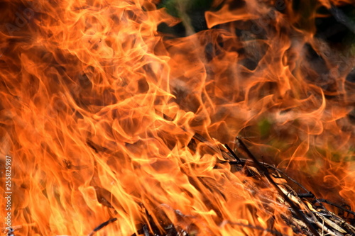 Burning Fire Firefighting Danger Nature Wood Background Stock Photo