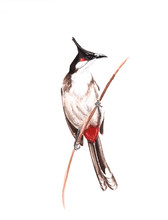 Watercolor Image Of A Bird With Wings And Tail Sitting On A Tree Branch On A White Background