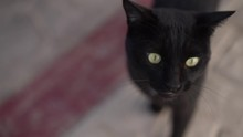 A Black Cat Says Meow So His J...