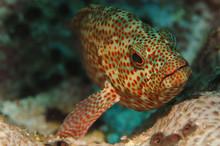 Underwater Fish Sea Bass Head