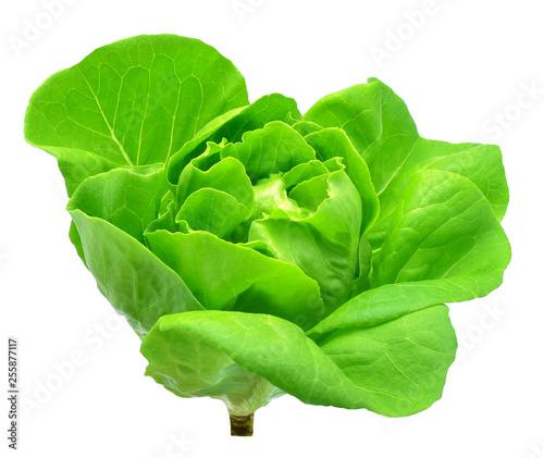 Butter head lettuce vegetable for salad on white back ground Fototapete