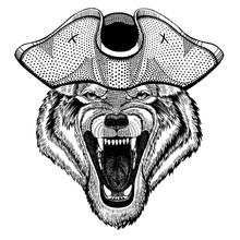 Wolf, Dog Wearing Pirate Trico...