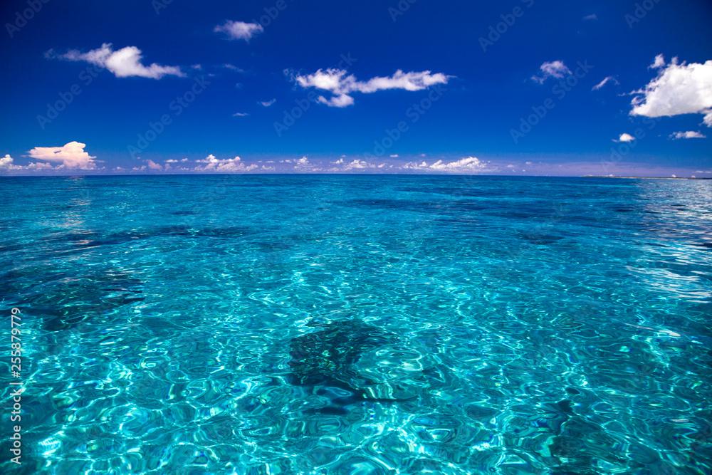 Fototapety, obrazy: 透明度の高いサンゴ礁の海