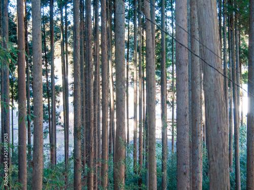 Recess Fitting Bamboo 林の日差し