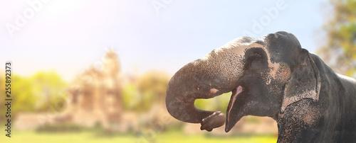Fototapeta Horizontal banner with elephant obraz