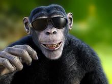 3D Rendering Of A Chimpanzee W...
