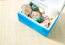 Sea Shells Collection In A Dec...