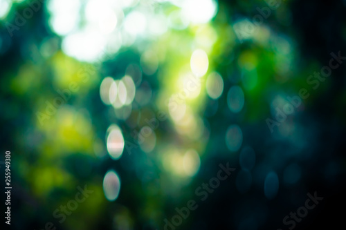 Foto  Selective green nature leaf with sunlight bokeh background