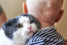 Cute Little Boy Is Hugging A Big Cat