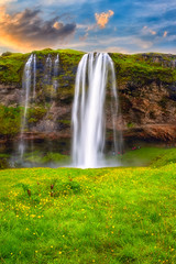Fototapeta Łąka Seljalandsfoss waterfall in Iceland at sunset, amazing summer landscape with green flowering meadow and falling water from the cliff, travel background, popular tourist attraction, vertical image